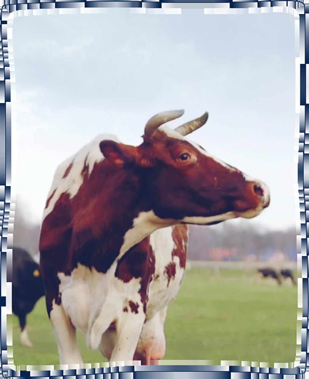 Unsere Milchbauern 8